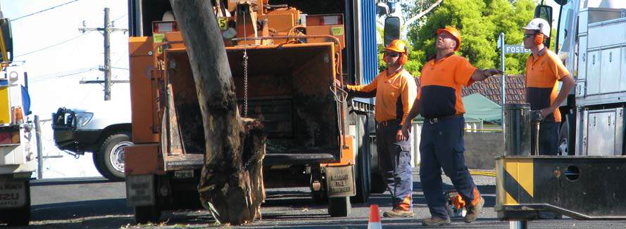 Workers removing tree trunk from the road