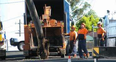 Tree Service Professionals With Machines