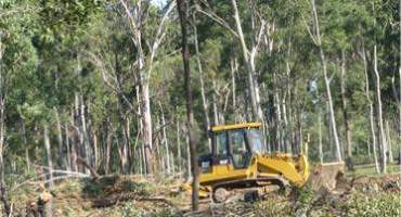 Lot Clearing By Chipping Standing Trees