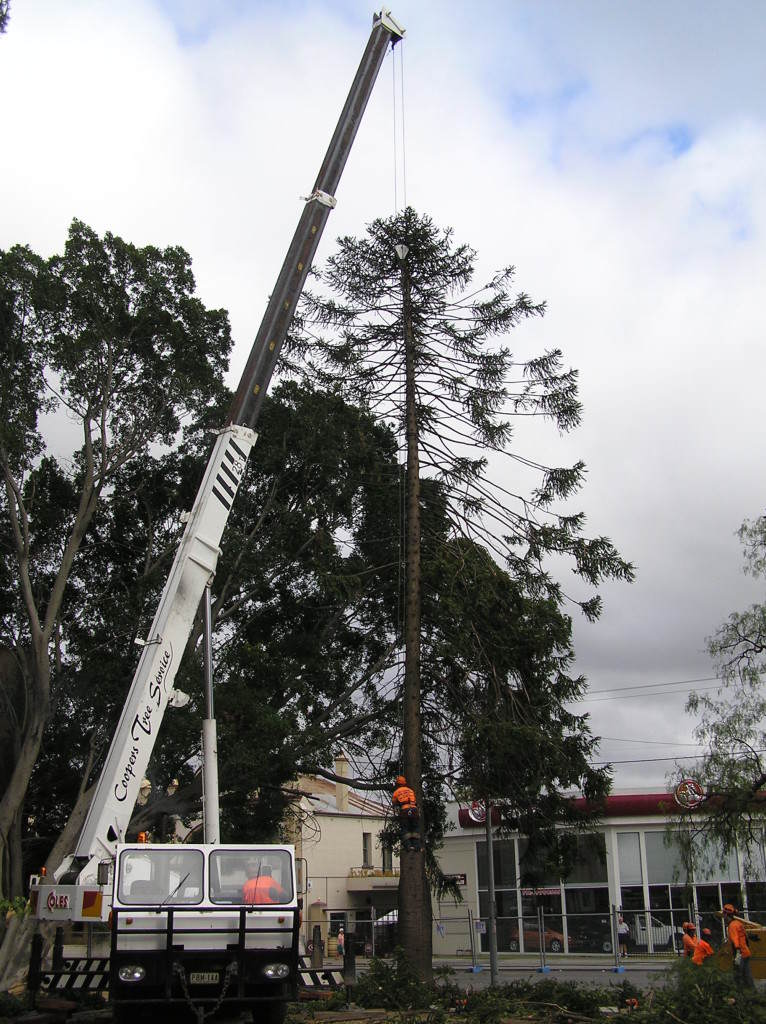 Crane Lifting A Tall Tree
