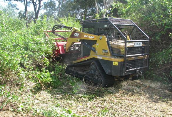 clearing lantana 07