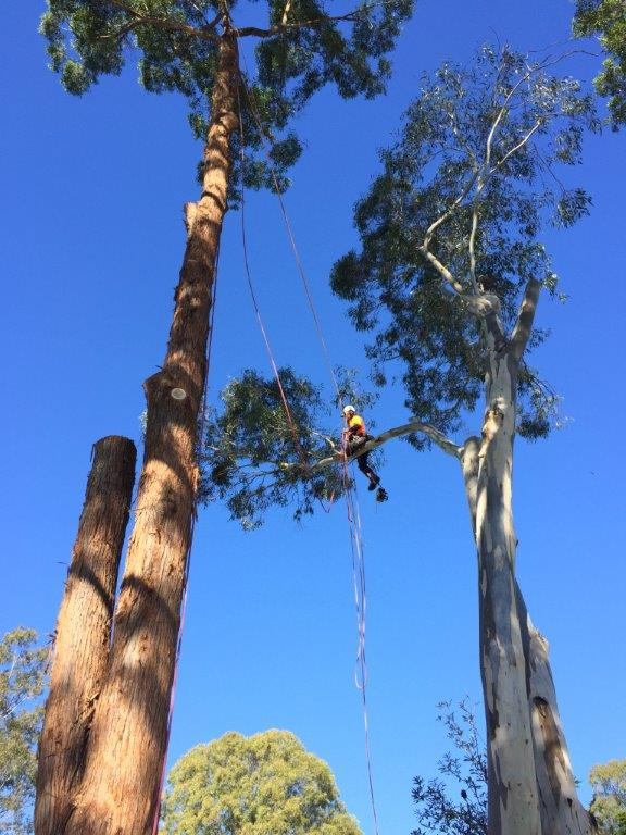 Tree Removal - tree removal services