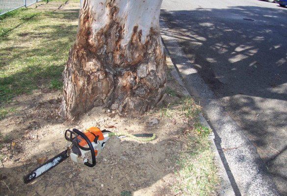 permission for tree removal