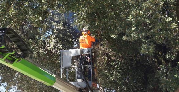 school tree management 02