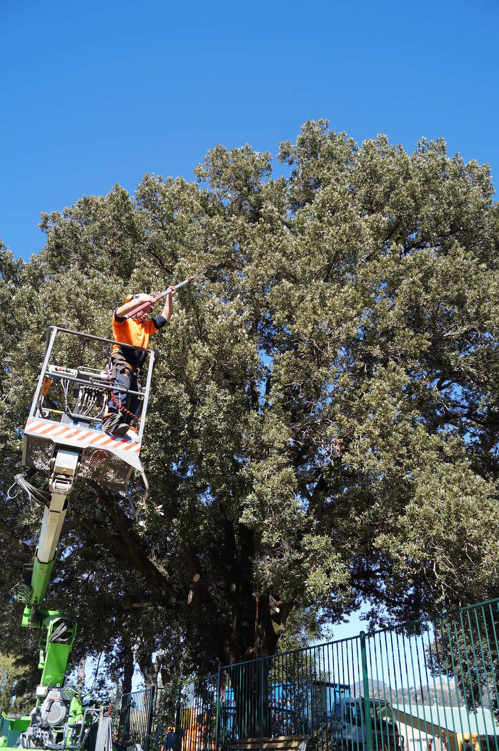 School Tree Inspections - school tree inspection