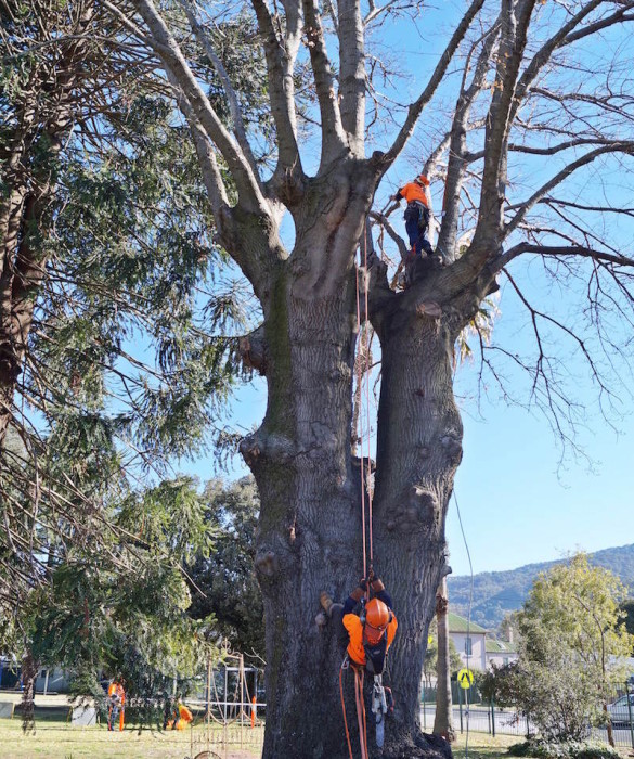 tree management services 07