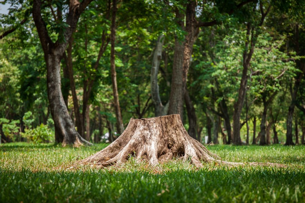 A tree stump in a forest