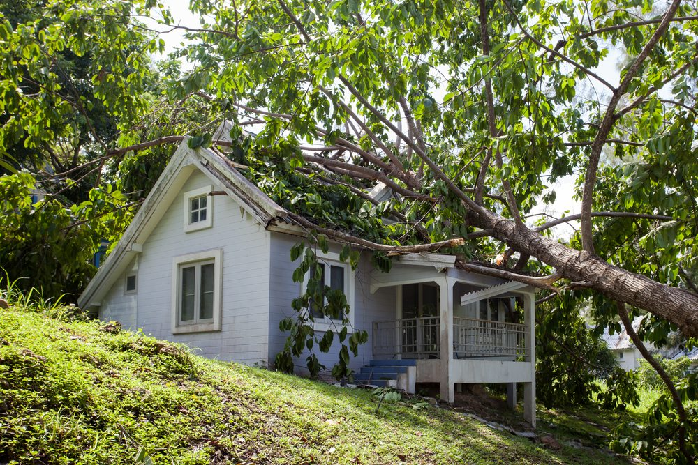 A tree that has fallen on a house during a storm