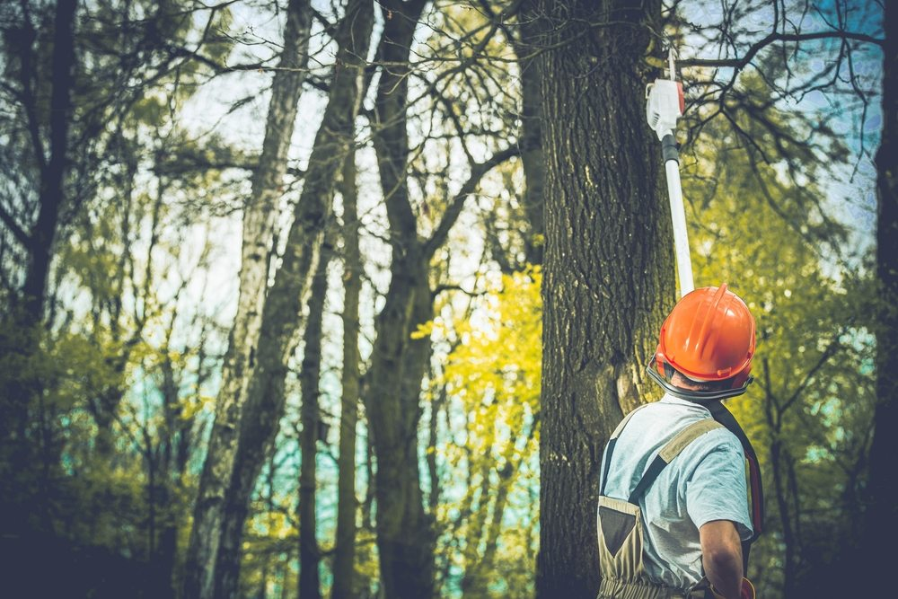 Image result for When Should I Call A Tree Service Professional?