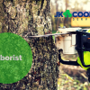 Getting to Know Your Arborist