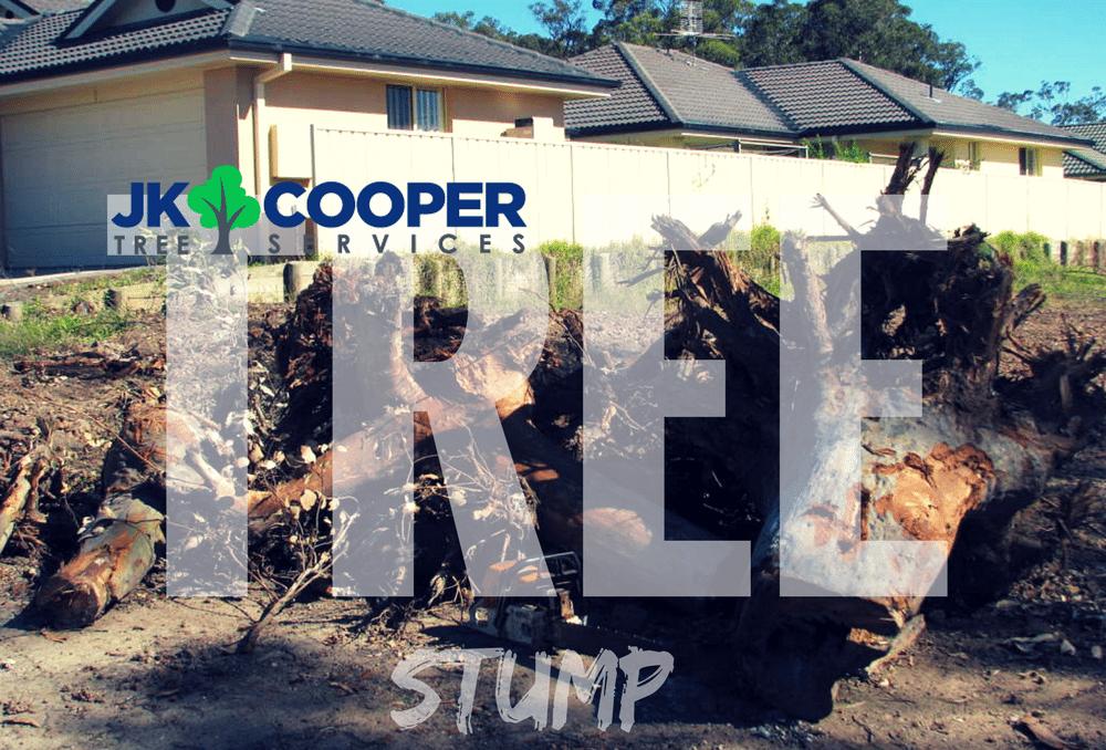 Removing the tree stump -