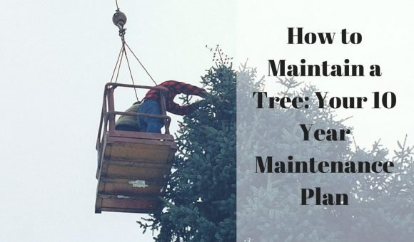 How to Maintain a Tree- Your 10 Year Maintenance Plan
