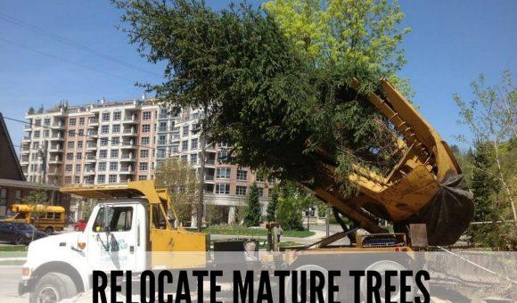 Relocate Mature trees