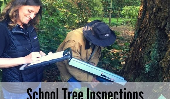 School Tree Inspections