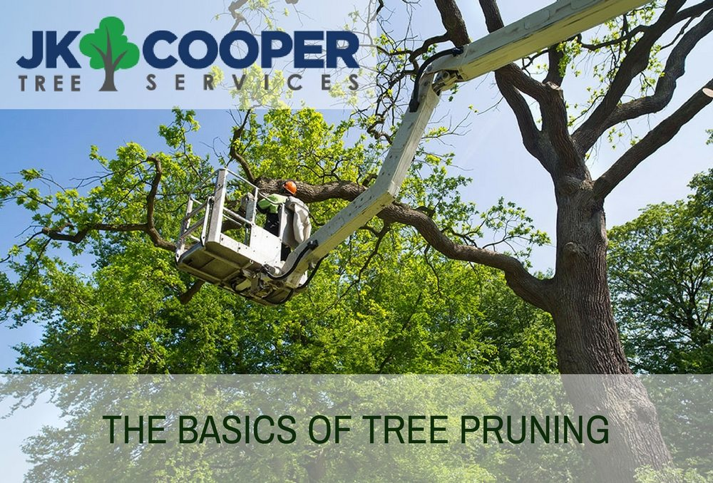 THE BASICS OF TREE PRUNING