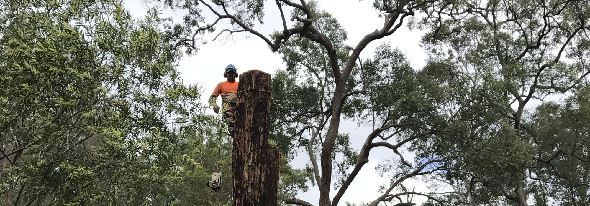 tree-removal-on-property